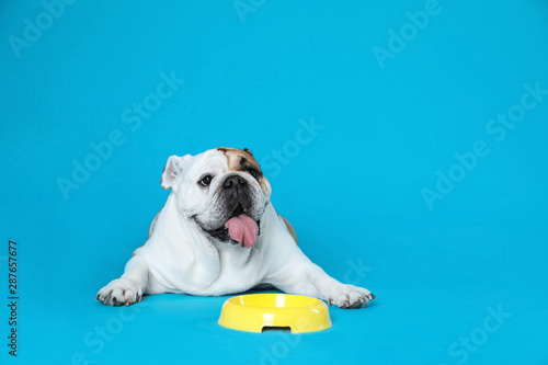 Obraz Adorable funny English bulldog with feeding bowl on light blue background, space for text - fototapety do salonu