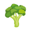 fresh broccoli vegetable nature icon