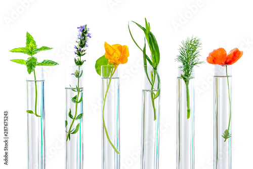 Photo  research Concpt on plants, aromatic herbs and flowers in test tubes