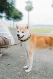 Fototapeta Zwierzęta - DOG
