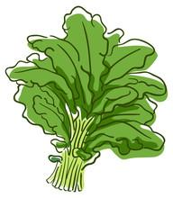 Kale Superfood Illustration