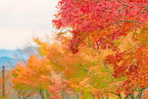 公園の秋景色