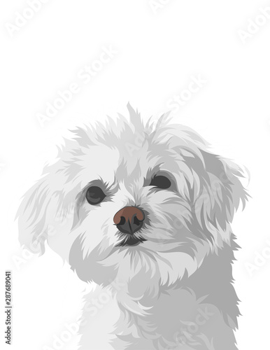 Valokuvatapetti dog isolated on white background