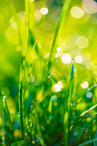 Fototapeta trawa   trawa-z-kropli-rosy-zblizenie