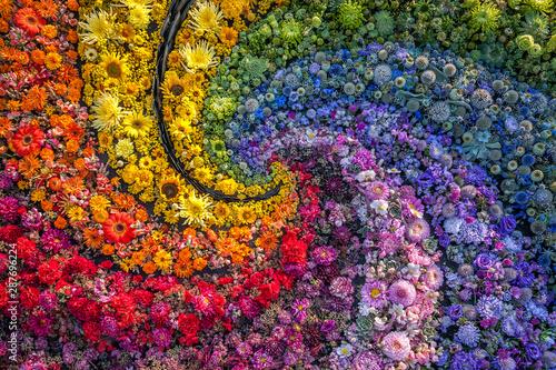 Valokuvatapetti A carpet of colorful flowers like a rainbow