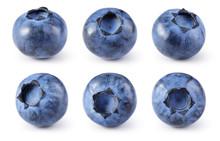 Blueberry Isolated. Blueberry ...