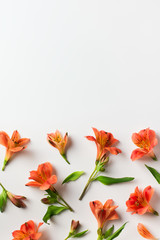 Beauty flowers flat lay with red alstroemeria frame on white background