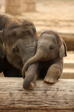 Elefantenkinder Im Zoo