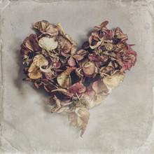 Dried Petals, Heart-shaped, Po...