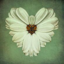 White Flower, Heartshaped, Surreal