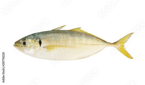 Yellowtail scad fish isolated on white background Slika na platnu