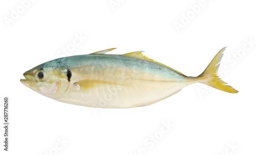 Fotografija  Raw yellowtail scad fish isolated on white background