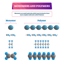 Monomer Or Polymer Vector Illustration. Labeled Chemical Educational Scheme