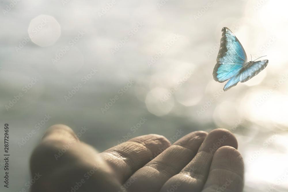 Fototapeta a delicate butterfly flies away from a woman's hand