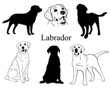 Labrador Set. Collection Of Pedigree Dogs. Black White Labrador Dog Illustration. Vector Drawing Of A Pet. Tattoo.