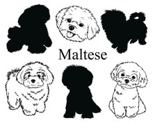 Maltese Set. Collection Of Pedigree Dogs. Black And White Illustration Of A Maltese Dog. Vector Drawing Of A Pet. Tattoo.