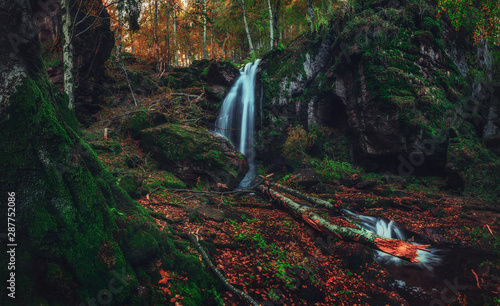 Fototapeta  Forest and stream. Beautiful autumn wood and river