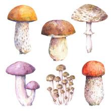 Set Of Edible Mushrooms - Birch Bolete, Honey Mushroom, Champignon, Tricholoma And Porcini. Watercolor Hand Drawn Illustration.
