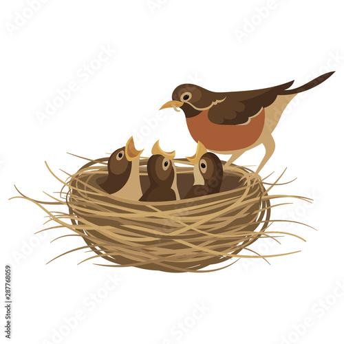 Fototapeta Cartoon bird's nest with chicks. Vector illustration for children. Springtime. obraz