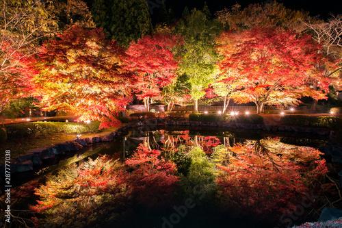 【岐阜県土岐市】曽木公園の紅葉のライトアップ