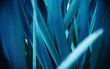 canvas print picture - Cyan blue natural background flora from flowers, macro photo