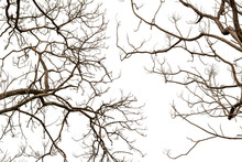Bare Tree Branches Isolated On White Background.
