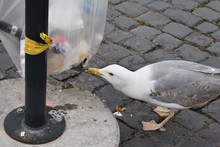 Hungry Gull Drilling And Scave...