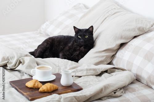 Obraz black cat on bed - fototapety do salonu