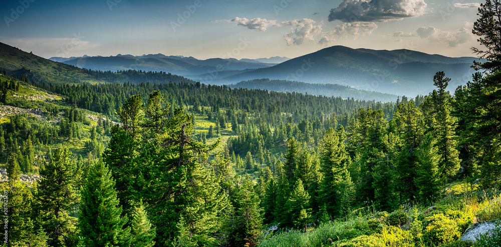 Fototapeta Beautiful sunset view in cedar forest in front of sayan mountain range, Ergaki national park, Krasnoyarsk region, Siberia, Russia