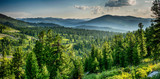 Fototapeta Las - Beautiful sunset view in cedar forest in front of sayan mountain range, Ergaki national park, Krasnoyarsk region, Siberia, Russia