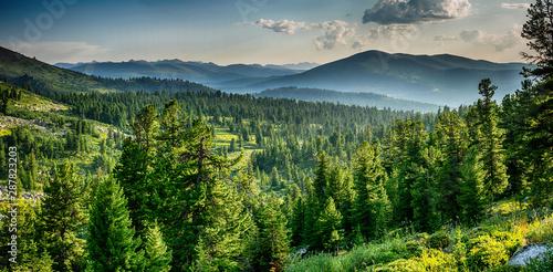 Fototapeta Beautiful sunset view in cedar forest in front of sayan mountain range, Ergaki national park, Krasnoyarsk region, Siberia, Russia  obraz
