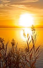 Panel Szklany Podświetlane Rzeka i Jezioro puesta de sol dorada entre la vegetacion del lago