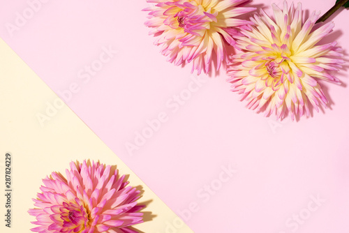 Poster de jardin Dahlia Festive flower bouquet over pastel pink and yellow background, copy space. Top view. Creative greeting card with dahlia flowers