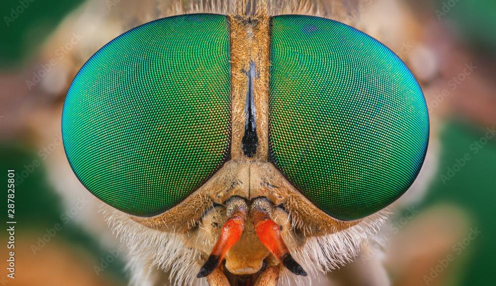Fototapeta horsefly insect macro green eye big color
