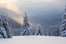 Sun Rays Enlighten The Snowy Lawn With Fair Trees. Majestic Winter Scenery. High Mountain.