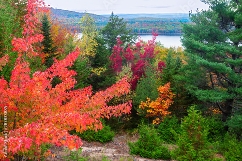 Photo Autumn Foliage in Acadia National Park in Maine