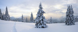 Fototapeta  - Winter landscape. Spectacular panorama is opened on mountains, trees covered with white snow, lawn and blue sky with clouds.