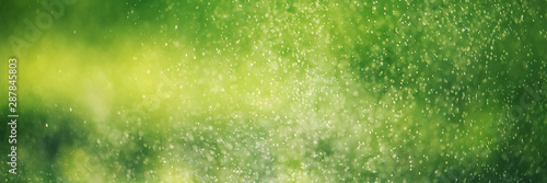 mata magnetyczna Blurred green grass and drops of morning fresh dew. Natural defocused bokeh background.