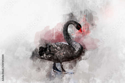 Watercolor illustration of a black swan on a white background Wallpaper Mural