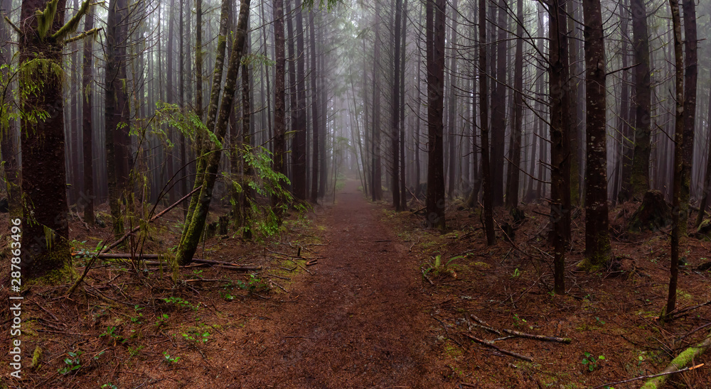 Fototapety, obrazy: Juan de Fuca Trail in the woods during a misty and rainy summer day. Taken near Port Renfrew, Vancouver Island, BC, Canada.