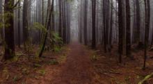 Juan De Fuca Trail In The Wood...