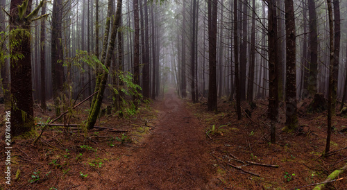 Fotomural Juan de Fuca Trail in the woods during a misty and rainy summer day
