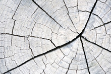 Cracked Wooden Wood Trunk