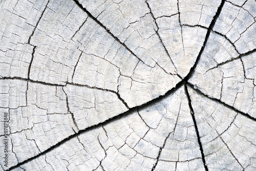 Fotografie, Obraz  Cracked Wooden Wood Trunk