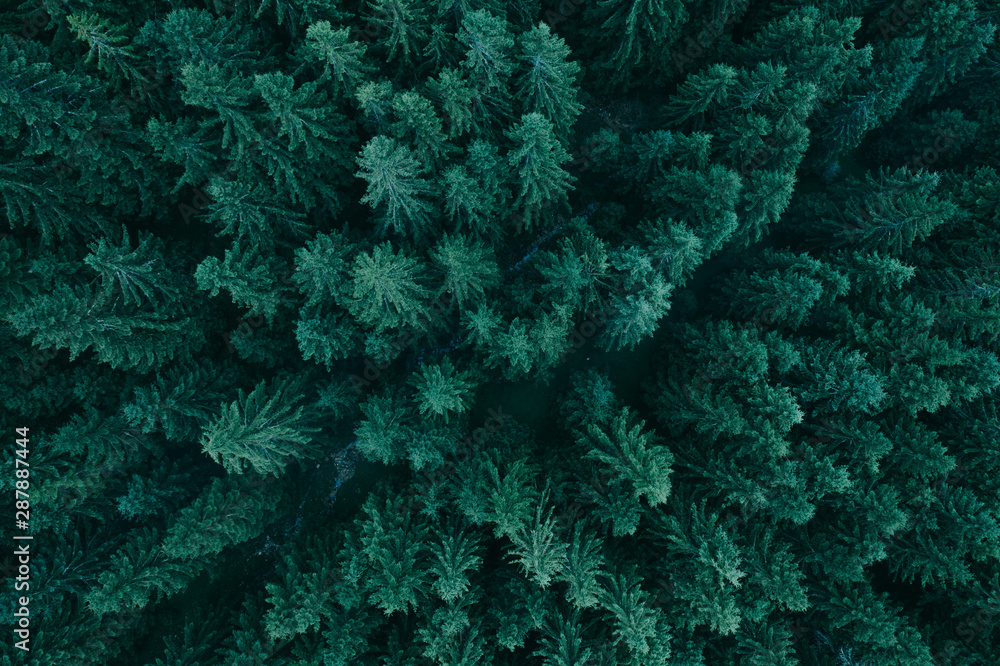 Fotografie, Obraz Forest from above