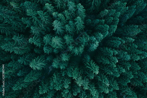 forest-from-above