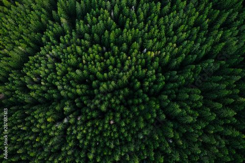 Forest from above Canvas