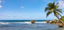 Bathsheba Beach Mit Palmen, Fe...