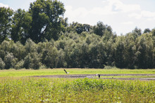 Small Lake With Storks