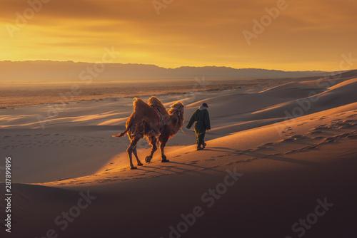 Valokuva Camel going through the sand dunes on sunrise, Gobi desert Mongolia